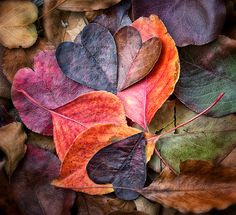 fancitaste: ambient-entropy: Fall In Love by Anne Worner (via TumbleOn)