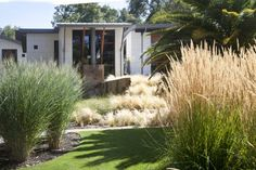 Saratoga Creek House - Contemporary - Landscape - San Francisco - by WA Design Architects Modern Landscaping, Front Yard Landscaping, Landscaping Ideas, Contemporary Landscape, Landscape Design, Landscape Grasses, Australian Native Garden, Australian Bush, No Grass Backyard
