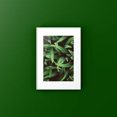 Greenest Grass Ever - Art Printable Spring Collection, Printable Art, Minimal, Poster, Etsy, Posters, Movie Posters, Minimal Techno