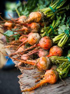 Harvest / Raccolto