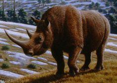 Wymarły nosorożec włochaty