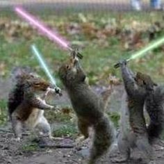 Jedi squirrels - hilarious!  What is my deal with squirrels lately??  I think it started with that squirrel-sized adirondack chair I hung on the tree for my friendly neighborhood squirrels.