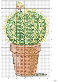 Gallery.ru / Фото #1 - cactus - patrizia61