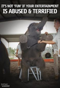 Imagine the terror...taken from your family and tormented your whole life! PLEASE boycott circuses that use animals, tell them why, & encourage others to do the same. PLEASE.