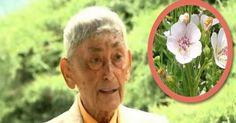 Un articol de Mihaela Iliescu     Hippocrate, parintele medicinei, considera nalba o planta medicinala valoroasa! Academicianul Ovidiu Bojo...