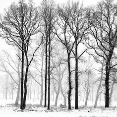 1000 images about wall mural on pinterest wall murals for Black and white tree wallpaper mural