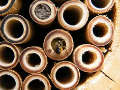 Welcome to the Bee Hotel   The Ark In Space