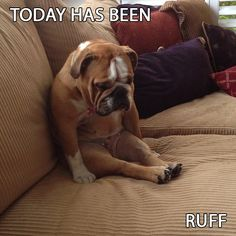 """RT is your Monday was a """"ruff"""" as this guy! #cute"""