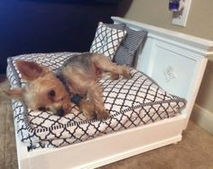 Items similar to dog bed, bed, cat bed, vintage, shabby chic ...