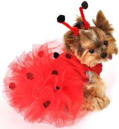 dog custumes halloween, pet costumes, puppy costume ladybug
