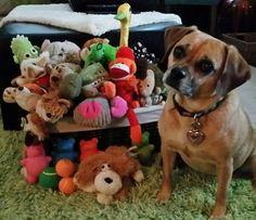 Toys organized