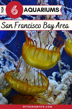 Discover 6 of the best aquariums in the SF Bay Area. My top picks include the Aquarium of the Bay, the California Academy of Sciences, and the Monterey Bay Aquarium. These family-friendly things to do around San Francisco are the perfect pick any day of the week! Visit California, California Travel, San Francisco With Kids, Monterey Bay Aquarium, Travel Usa, Travel Tips, Aquariums, Marine Life, Bay Area