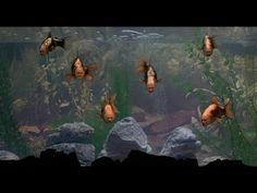Monty Python - Find A Fish