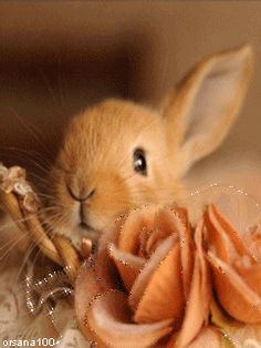 Sweet Little Bunny cute easter animated gif easter bunny happy easter easter greeting