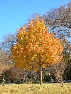 Fall in Dallas