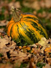 How to Pick the Perfect Pumpkin for pumpkin seeds