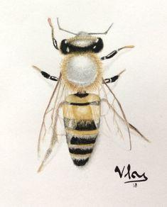 Wasp by tucna.deviantart.com on @DeviantArt