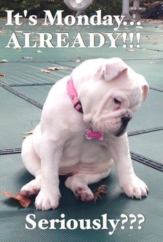 It's monday, already!! funny cute puppy lol monday good morning good morning beautiful good morning photo