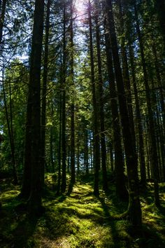 A Most Un-Norwegian Summer   Life: A Scot in Norway