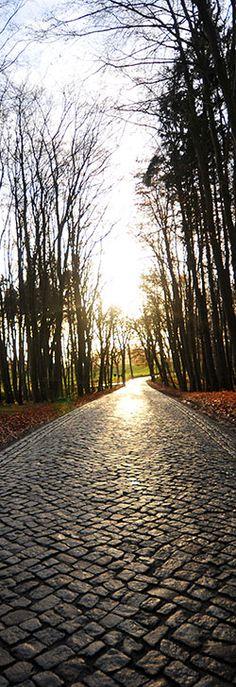 Allee im Herbst auf Rügen www.faszination-mv.de