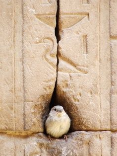 this little one chirps in ancient egyptian