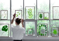 Ideas for plant press frame - www.omeology.co.za