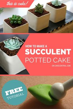 How to Make Potted Gumpaste Succulent These sweet little potted succulents are perfect for adding that extra touch of freshness to dessert time. Whether you're making a. Fondant Flower Tutorial, Fondant Flowers, Cake Tutorial, Succulent Wedding Cakes, Succulent Cupcakes, Cactus Cupcakes, Potted Succulents, Succulent Pots, Edible Succulents