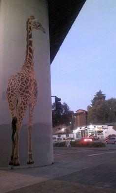 North Oakland CA 2011