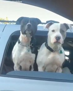 Cute Animal Videos, Cute Animal Pictures, Funny Animal Memes, Funny Dogs, Funny Memes, Cute Little Animals, Cute Funny Animals, Beautiful Dogs, Animals Beautiful