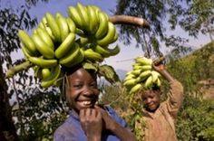 Teach kids how other country's play a role in their everyday lives. Learn the process your banana goes through before it makes it into your fruit basket!