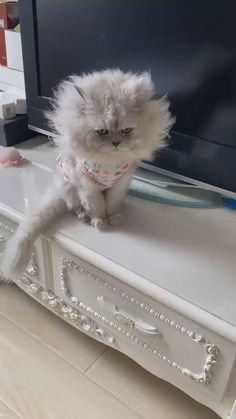 Funny Cute Cats, Cute Cat Gif, Cute Funny Animals, Cute Baby Animals, I Love Cats, Cool Cats, First Time Cat Owner, Cat Emoji, Cute Animal Memes