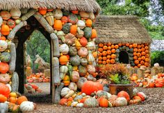 This Halloween, Dallas Arboretum is making it 'big' with the Pumpkin Village that makes use of more than pumpkins, gourds and squash. The astounding Cinderella-themed pumpkin village has been… Pumpkin House, Pumpkin Art, Happy Pumpkin, Pumpkin Squash, Spiced Pumpkin, Pumpkin Head, Dallas Arboretum, Samhain, Mabon
