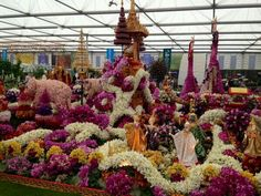 A display of orchid flowers from the Chelsea flower show