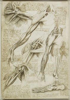 charcoal sketches renaissance | Da Vinci drawing forom 1511 of drawings of muscles of the shoulder ...