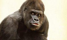 'El mono sabio', una dinámica grupal para desarrollar la atención