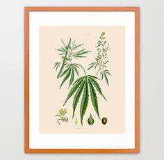 Marijuana Poster - Weed Art - Cannabis Poster - Cannabis Art - Marijuana Print - Cannabis Sativa - Marijauna Art Print - Medicinal Plants by WunderkammerStudio on Etsy https://www.etsy.com/listing/166251803/marijuana-poster-weed-art-cannabis