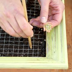 "Step 8: Poke a Hole          On a flat surface, lay out succulent cuttings in the design you want in the frame. Push a chopstick or pencil through one square of the wire grid and into the soil. Meyers recommends starting near one corner of the frame. ""I love to create a wave or river through the picture,"" she says. ""It gives the eyes somewhere to drift."""