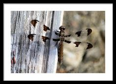 #Dragonfly 9204 Framed Print By Bonfire #Photography