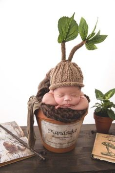 how to convert a plain knit hat into a baby mandrake hat from Harry Potter for n. - Halloween & Fall - how to convert a plain knit hat into a baby mandrake hat from Harry Potter for newborn photos - So Cute Baby, Baby Kind, Cute Babies, Baby Harry Potter, Harry Potter Nursery, Harry Potter Baby Clothes, Baby Kostüm, Baby Sleep, Newborn Pictures