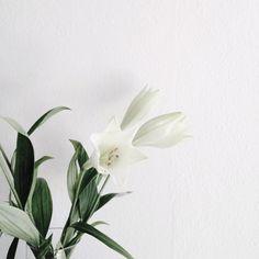 lilies. / @bellafosterblog