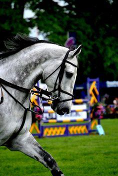 Love greys <3