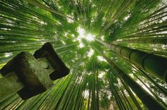 Bamboo Forest Kamakura by Danny Dungo on 500px
