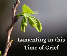 Lamenting in this Time of Grief