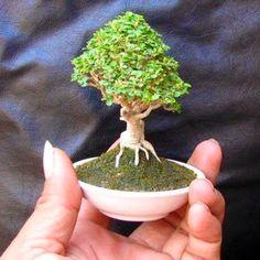 39 Beautiful Bonsai Trees Ideas For Indoors Mini Garden Jade Bonsai, Bonsai Plants, Bonsai Garden, Garden Trees, Trees To Plant, Bonsai Trees, Plantas Bonsai, Mini Bonsai, Ikebana