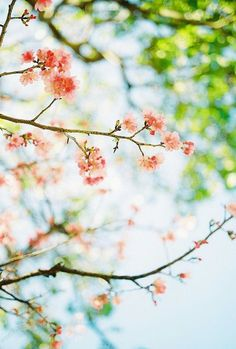 Beauty in nature | nature | | spring |  #nature  https://biopop.com/