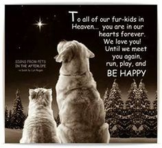 To all our fur kids in heaven Dog Quotes, Animal Quotes, I Love Dogs, Puppy Love, Chien Golden Retriever, Animals And Pets, Cute Animals, Pet Loss Grief, Pet Remembrance