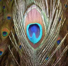 Peacock-Theme Christmas Decorating Ideas