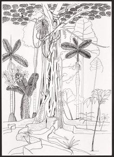Dessin aux multiples détails de Francis Hallé qui représente un Ficus dont les racines forment un carcan qui empêche l'arbre qui a germé en son sein, un figuier,  de s'accroître; il le tuera, et l'arbre transformé en humus nourrira le Ficus...   -- F. Hallé, Ficus étrangleur, forêt de Pakitza, Amazonie péruvienne, Crayon et encre sur papier, 42 × 30 cm. Collection de l'artiste.