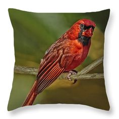 Male Cardinal Headshot Throw Pillow by Kay Brewer