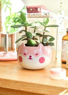 Shopzoki White Plants, Small Plants, Potted Plants, Ceramic Plant Pots, Kawaii Room, Cute Room Decor, Shiba, Day Up, Home Deco